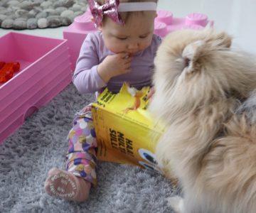 vauva ja koira