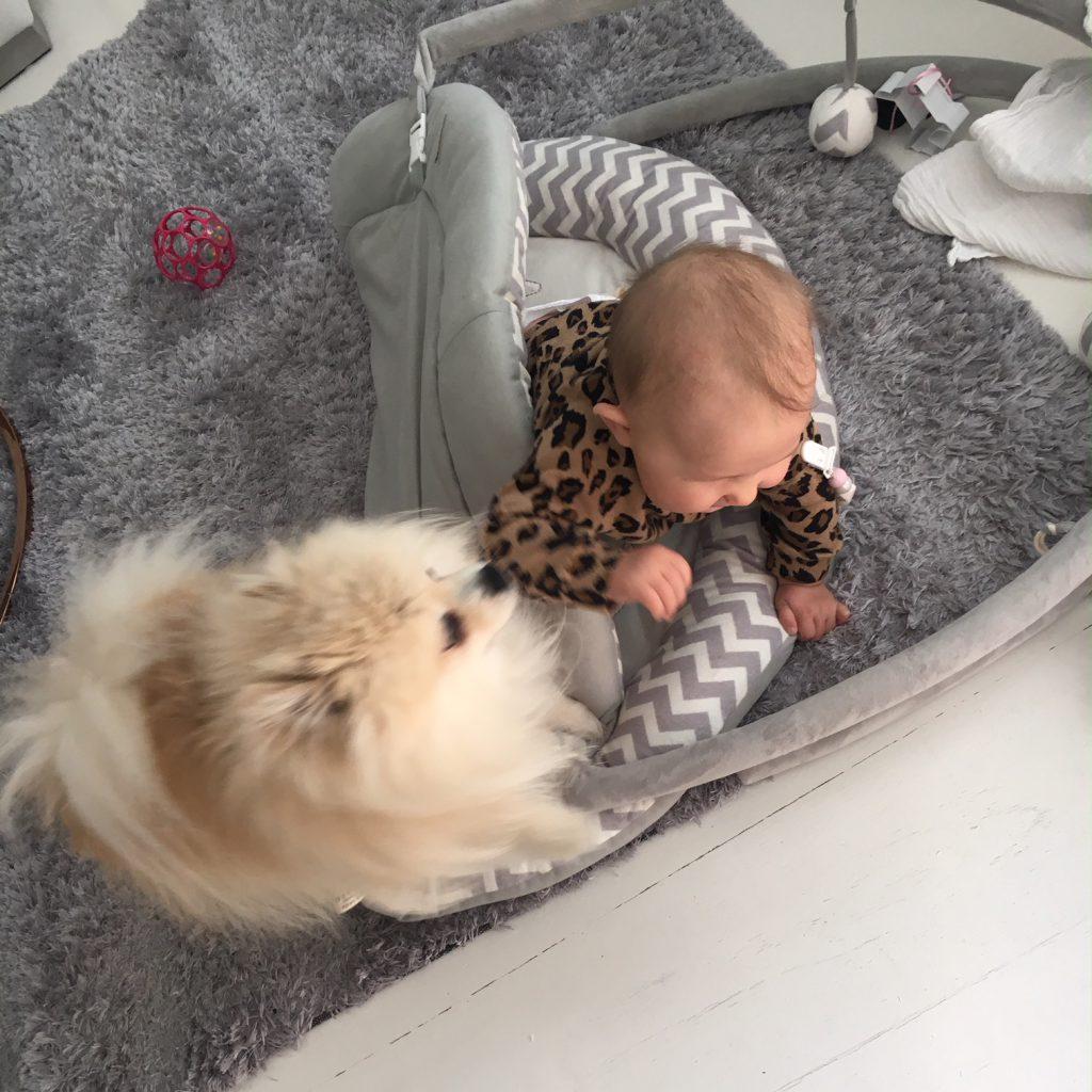 Koira ja vauva perheessä