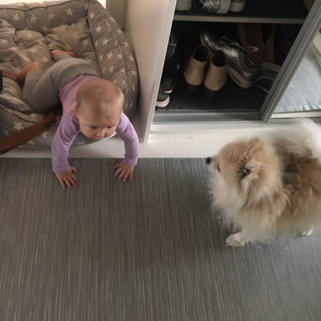 vauva koiraperheessä